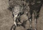 Black vulture print