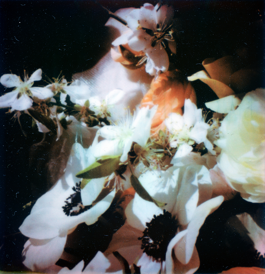 photo of a mix of flowers with a black background