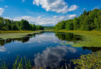 Photograph of a beautiful blue sky with puffy white clouds, verdent trees a pond with clouds relfected in it and pond weed on the edges.