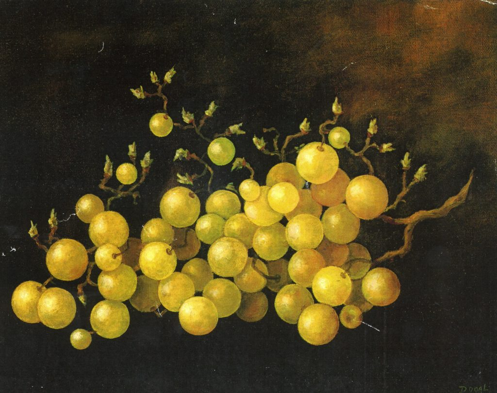 oil painting of a bunch of yellow grapes, 1/4 of which have plucked from the bunch